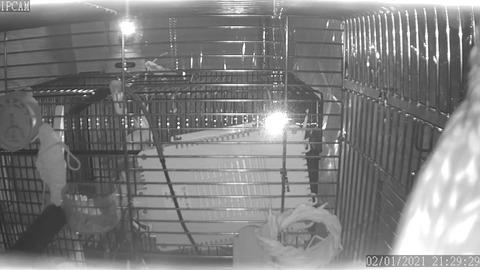 ネットワークカメラ-21.29.29