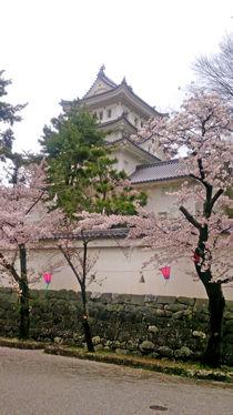 大垣城の桜①