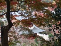 勝尾寺 ⑨