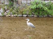⑨獲物を狙う鳥