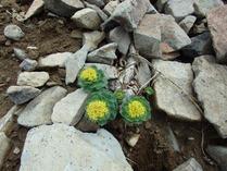 ⑫-1 高山植物