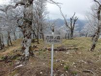 ④古田の森