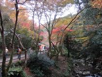 箕面公園 ⑤