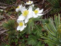 ⑫-3 高山植物