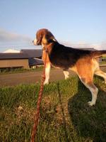 朝日に映える勇女犬