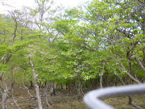 竜が岳 4 シロヤシオ