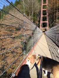 多良峡吊り橋?何ですか