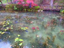 2-③モネの池