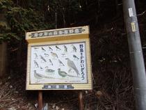 ⑲釜ヶ谷山