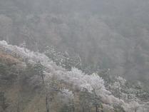 ⑧頂上より 眼下の樹氷
