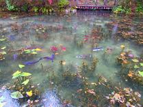 2-②モネの池