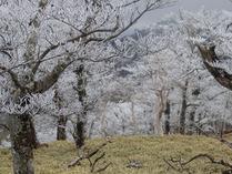 ⑤-1 樹氷