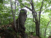 ②人間の顔のような岩