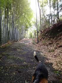 関ヶ原の丸山烽火場
