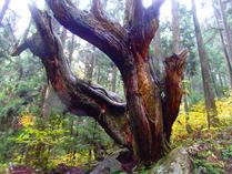 2-④モネの池・近くの21世紀の森