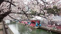 ㉓大垣の桜