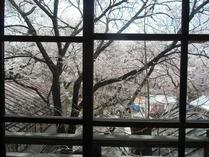 ④高遠閣よりの花吹雪