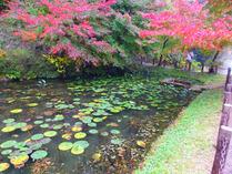 2-①モネの池