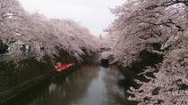 奥の細道記念館の桜①