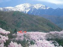 ⑨ポスターより 高遠・満開の桜
