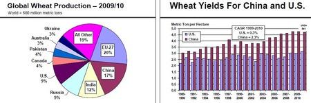 Wheat_20110120_3