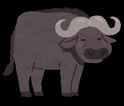 animal_buffalo