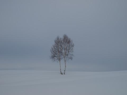 イチャイチャの木3