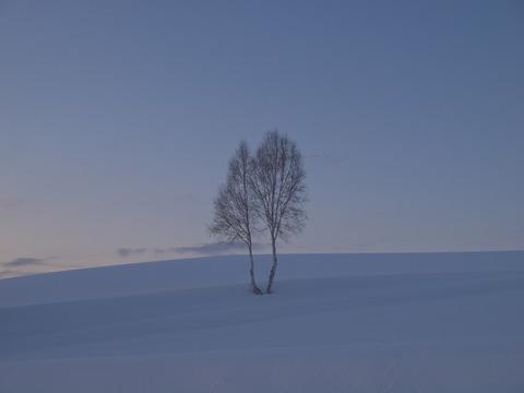 イチャイチャの木2