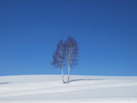 イチャイチャの木
