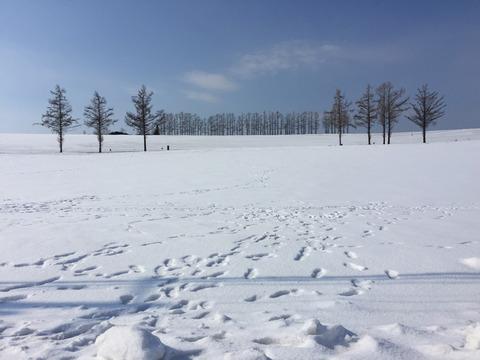 雪上に残された人間の醜い足跡①