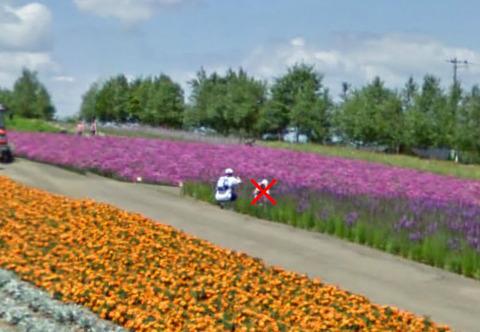 リアトリスの花畑