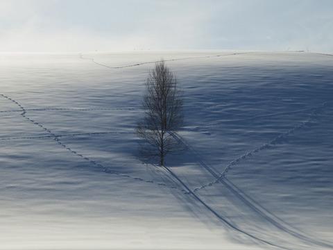 二人羽織の木