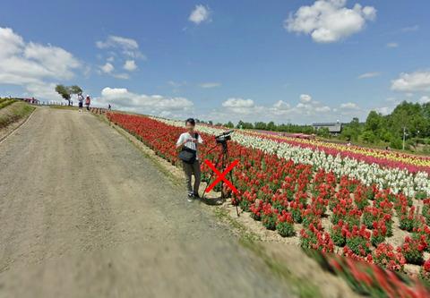 金魚草の花畑