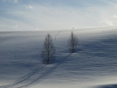 二人羽織の木2