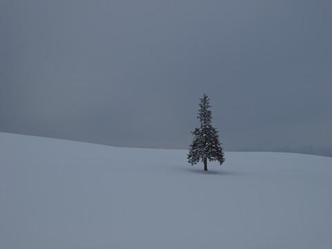 クリスマスツリーの木2
