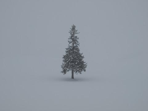 クリスマスツリーの木3
