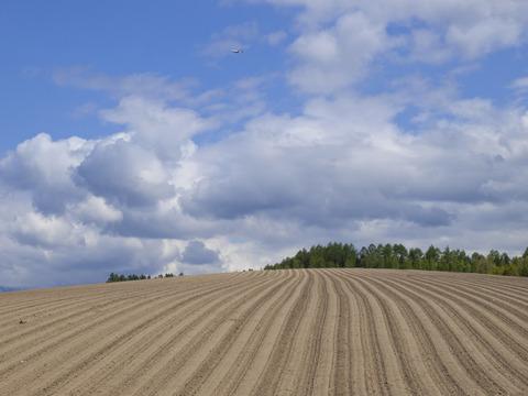 丘のストライプ2