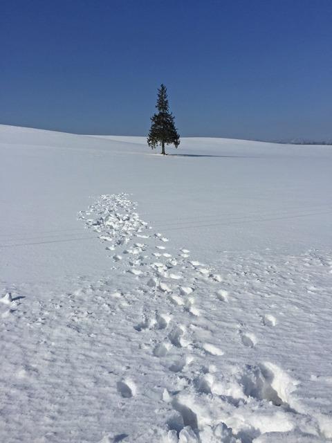 雪上に残された人間の醜い足跡③