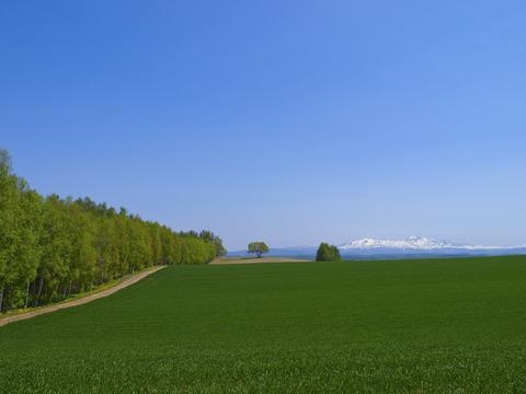 白樺並木がある丘
