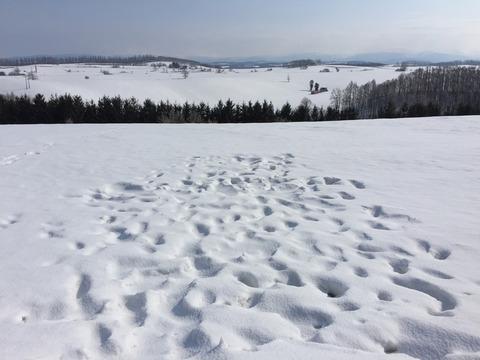 雪上に残された人間の醜い足跡②