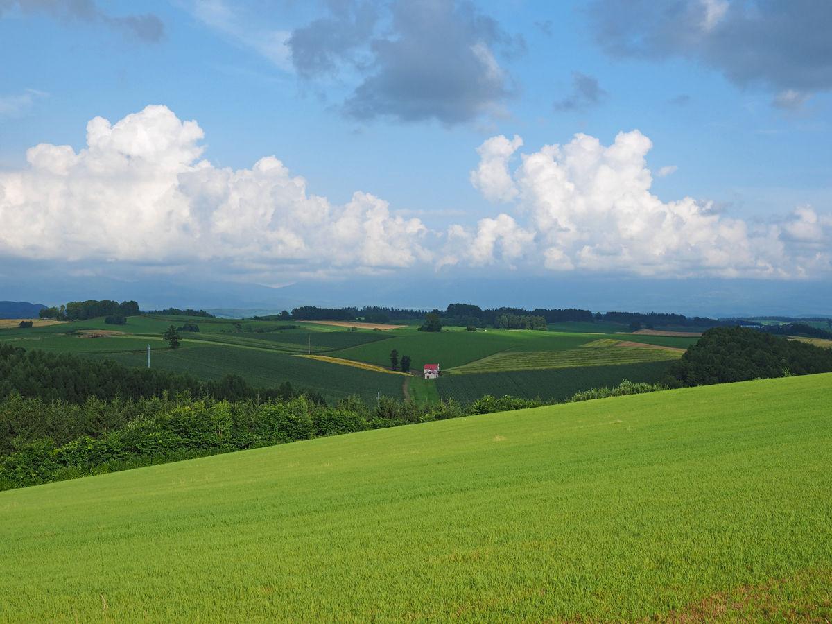 P7270969 丘の旅人 : 丘のまち美瑛の観光マナーとルール 丘の旅人 『美瑛の丘をめぐる旅