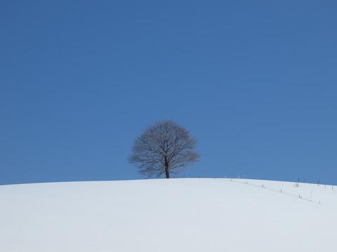 吟遊詩人の木