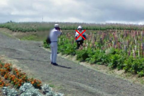 ルピナスの花畑