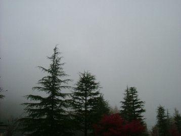 今日の草津温泉は・・・ガスってます