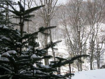 雪降ってます!