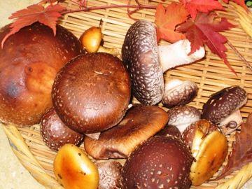 今日の草津温泉丘の上のホテルは・・・秋から冬へ