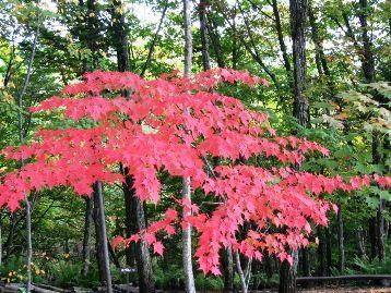 今日の草津温泉は・・・紅葉真っ盛り!