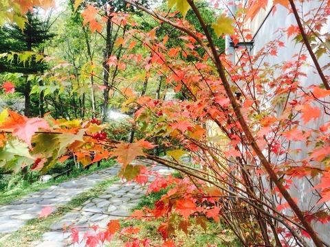 紅葉がぼちぼち始まりました