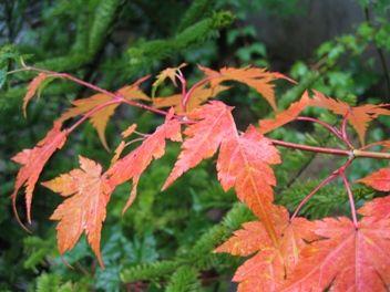 今日の草津温泉は・・・早くも紅葉?
