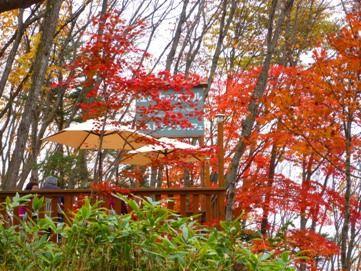紅葉真っ盛りのオープンテラス